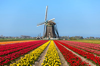 Riviera Travel to the Dutch Bulbfields - April 2015